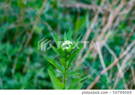 꽃 한송이 50799009