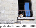 Cat fucking in thought 50800080