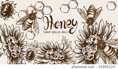 Honey, bees and sunflowers Vector line art card. 50800324