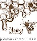 Honey, bees combs Vector line art. Retro vintage 50800331