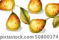 Pear fruits Vector watercolor pattern. delicious 50800374