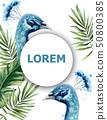 Peacock watercolor Vector card. Blue birds tropic 50800385