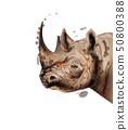 Rhino Vector watercolor. Wildlife animal 50800388