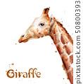 Giraffe Vector watercolor. wildlife safari animals 50800393
