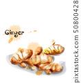 Ginger Vector watercolor. delicious icon vegetable 50800428
