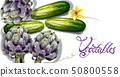 Artichoke and cucumber vegetables Vector 50800558