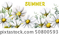 Chamomile summer background Vector watercolor. 50800593