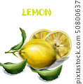Lemon isolated Vector watercolor texture. Vintage 50800637