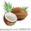 Coconuts Vector realistic. template tropic exotic 50800702