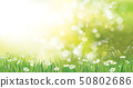 Vector summer nature  background. 50802686