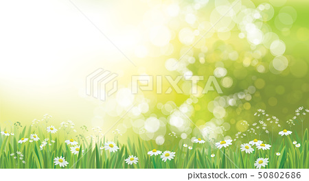 Vector summer nature  background. 50802686