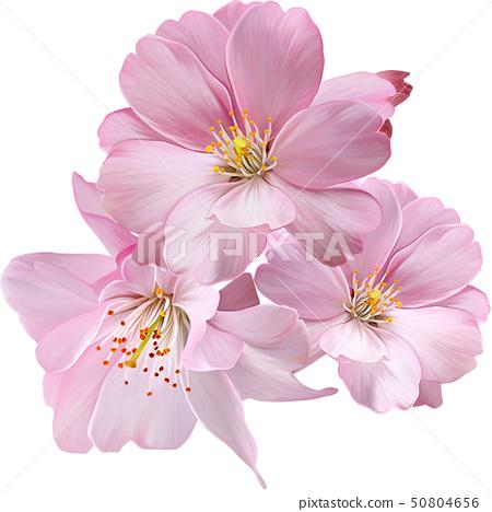 桃花花卉集合 50804656