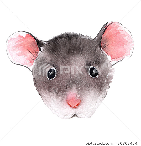 Wild rat. Mouse Chinese new year. Watercolor illustration. 50805434