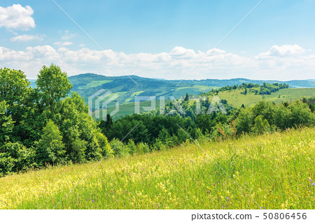 beautiful summer countryside in mountains 50806456