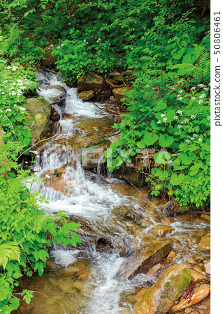 wild stream in the forest shade 50806461
