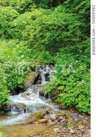 wild stream in the forest shade 50806462
