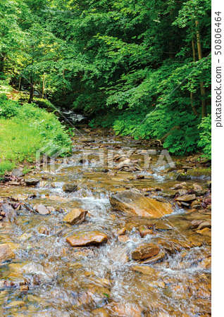 wild stream in the forest shade 50806464