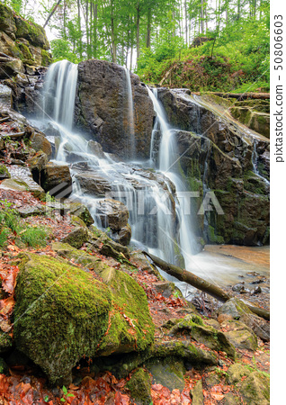 beautiful waterfall in the beech forest 50806603