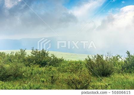shrubs on a meadow in fog 50806615