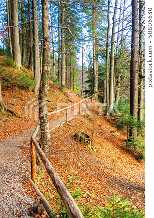 footpath through autumn forest in late autumn 50806630