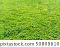 잔디, 들판, 토끼풀 50809610