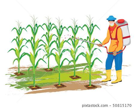 agriculturist sprays corn plant vector design 50815170