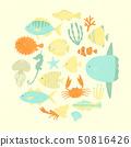 魚 50816426