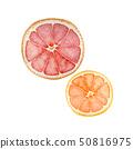 여름 열대 과일 자몽 오렌지 수채화 일러스트 50816975