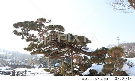 하얀눈 나무 공원 50822038