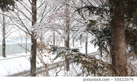 하얀눈 나무 50822074