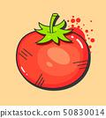 西紅柿 番茄 向量 50830014