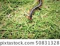 초목을 진행 지네 기분 나쁜 위험한 곤충 50831328