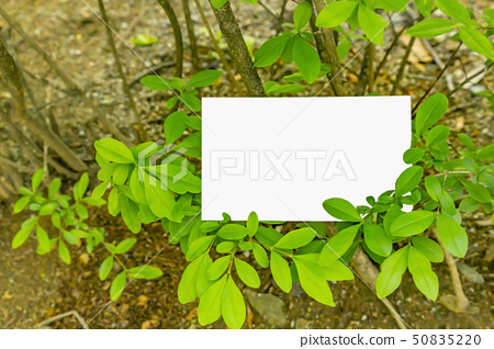 Leaves and card background image 50835220