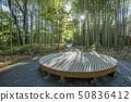 Shuzenji Hot Spring Bamboo forest small diameter 50836412