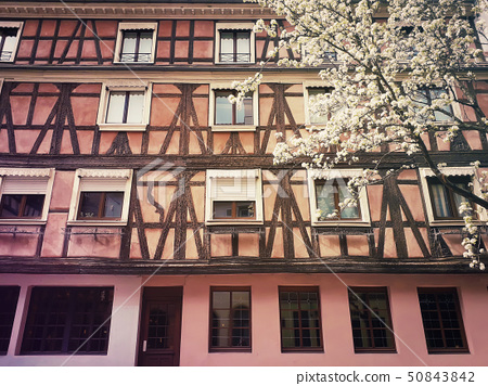 Colorful wooden building facadeand a blooming tree 50843842