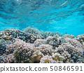 산호초 50846591