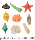 Summer tropical objects. Marine shells in cartoon style. Vector pictures set 50848909