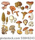 Colored nature vector illustrations of mushrooms. Truffles, slippery and chanterelle 50849243