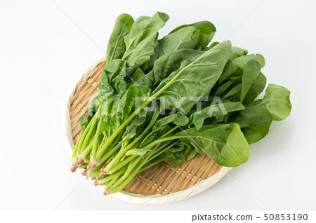 菠菜 50853190