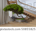 Bonsai tree in the interior of a private house 50855825