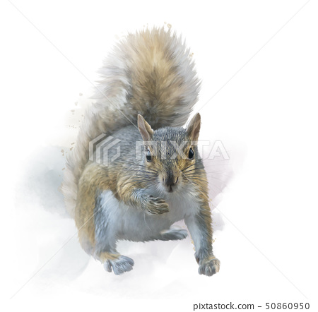 American gray squirrel on white background. 50860950