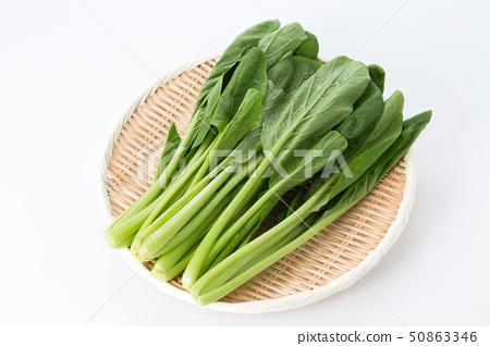 日本芥末菠菜 50863346