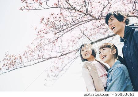 樱花春天 50863663