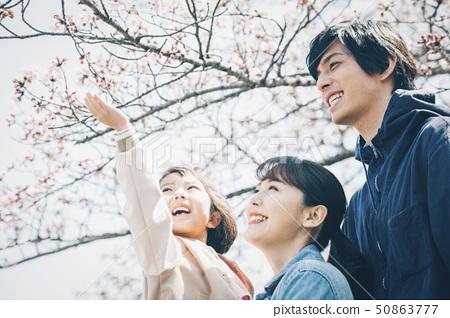 樱花春天 50863777