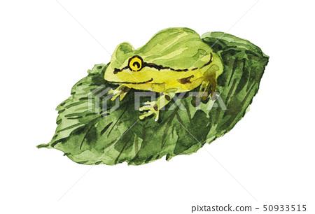 Rain frog 19520 pix7 50933515