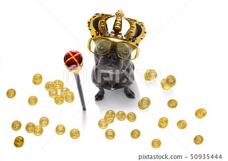 king rich money dog 50935444