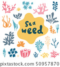 Sea plants and aquarium seaweed vector set. Nature seaweed doodle silhouette illustration 50957870