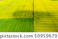 Aerial view of summer fields. Yellow fields from 50959670