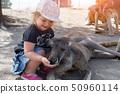 Little child girl age 1-2 feed grey kangaroo in Israel 50960114
