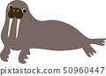 fur seal 50960447